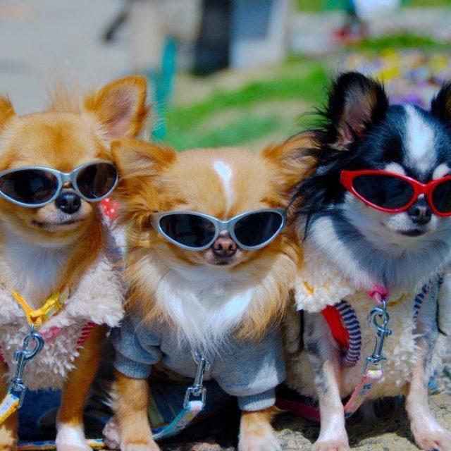 Stop al abandono: alternativas para nuestras mascotas en verano