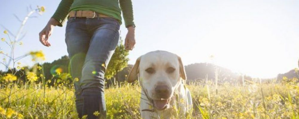¿Cuáles son las necesidades de ejercicio de mi perro?