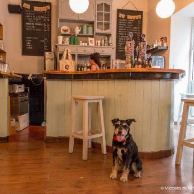 Restaurantes en Madrid que admiten mascotas
