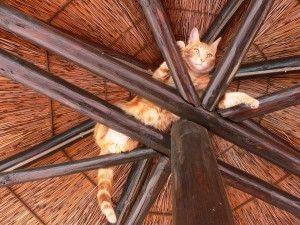 cat-164426_960_720