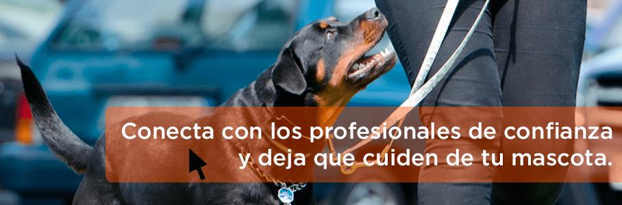 imagen-blog-perro